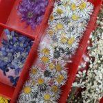 Stockage des fleurs
