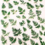Séchage de feuille Artemisia